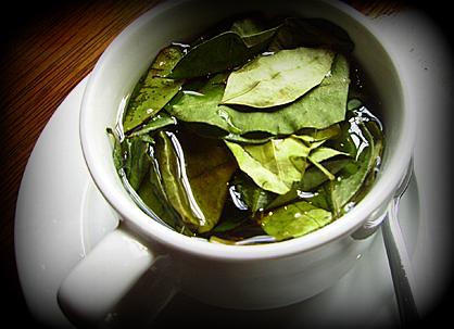 Güney Amerika coca çay
