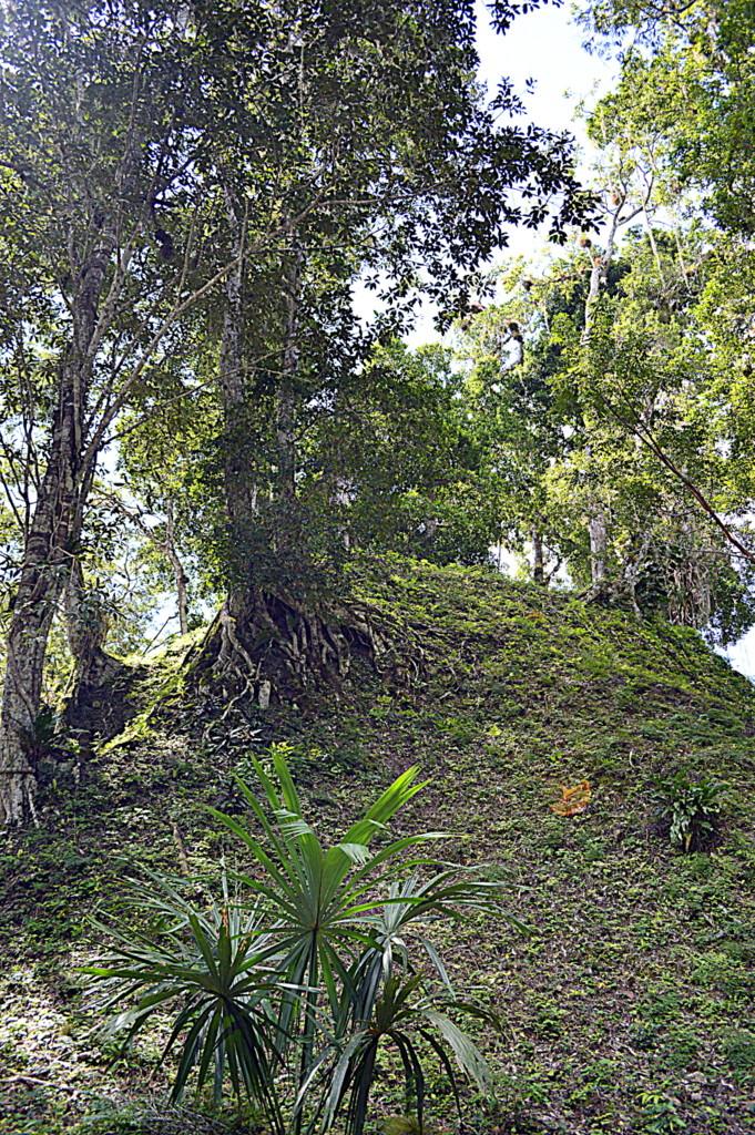 Tikal nerede