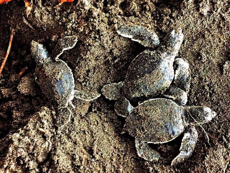 Sevimli Kaplumbağalar